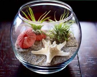 THREE Air Plant Terrariums, Glass Terrarium, DIY Terrarium, Beach Terrarium, Air Plant Terrarium, Birthday, Desk Warming Gift, Airplants
