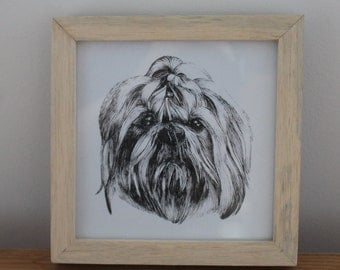 Shih tzu wood framed illustration