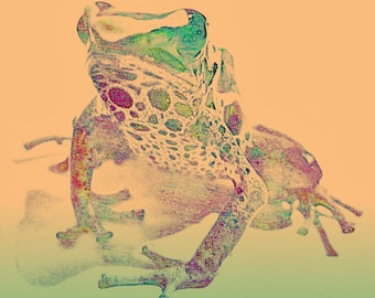 Poster frog original art print poster printing colorful frog in orange green Popart poison dart frog 20 x 20 picture frog art