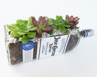 Jose Cuervo Glass Succulent Planter / Tequila Bottle Garden Gift / Custom Tequila Gifts / Gift Ideas for Her / Indoor Plants Bottle Planter