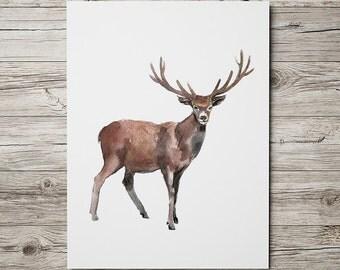 Watercolor deer print Nursery decor Animal art ACW195