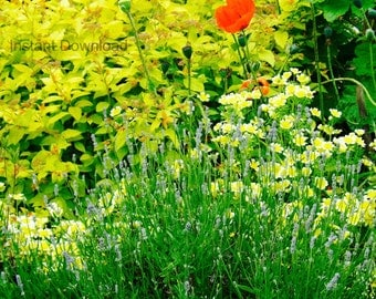 Downloadable Image | Flowers | Garden | Instant Download JPEG