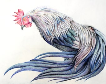 Phoenix Rooster and Hen colored pencil drawings 18x24 artist grade paper