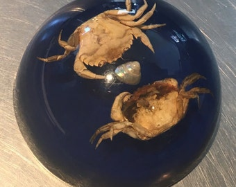 Vintage Taxidermy crab paperweight shells/marine/seaside resin bathroom decoration gift