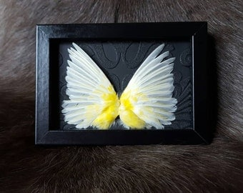 Framed canary wings