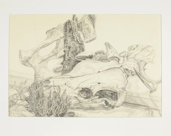 ORIGINAL painting, pencil/ink, signed, still life, desert, skulls, bones, nature, gift art, 18x24/mounted 22x281