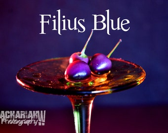 Filius Blue (15+ Seeds)