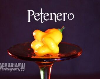 Petenero (15+ Seeds)