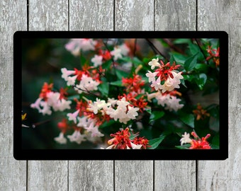 Flower Blossom, Living Room Decor, Nature Wall Art, White Blossom, White Flower Photo, Plants Photo, Nature Photo, Spring Flower Photo