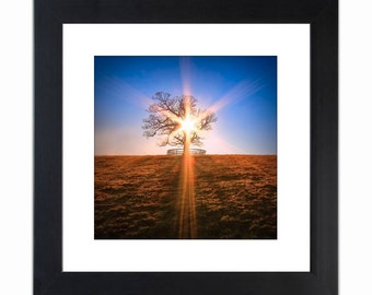 Lone Tree Fine Art Photography Print - You Are Not Alone - by Dave Noonan