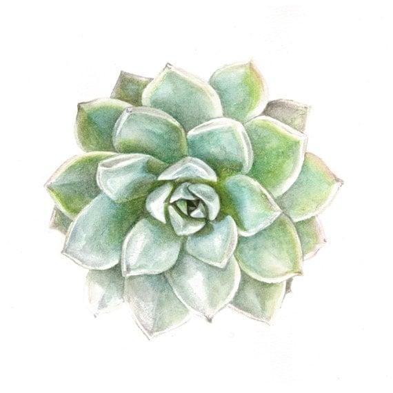 Succulent Watercolor Print Green Echeveria