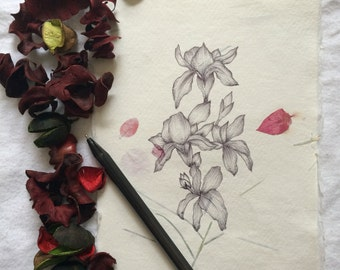 Orchid type original drawing