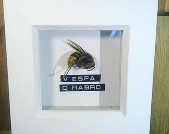 Hornet in a frame