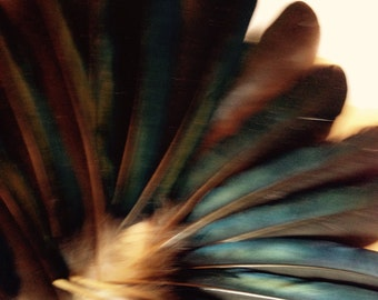 Pack of twenty magpie wing feathers