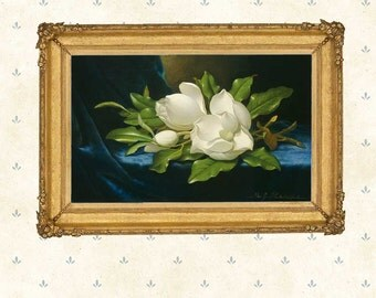 Still life painting, Giant Magnolias on a Blue Velvet Cloth, 1890 by Martin Johnson Heade.American art print, Giclee,  masterpiece painting.