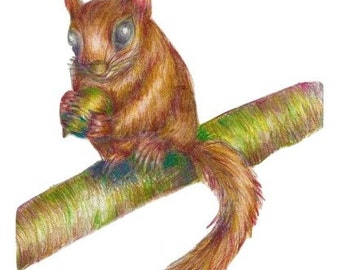 Squirrel fine art print, coloured pencil art, art print, animal sketch, mammal art, chipmunk art, squirrel sketch, squirrel print