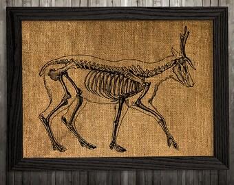 fran ais vintage dimpression squelette humain squelette art. Black Bedroom Furniture Sets. Home Design Ideas