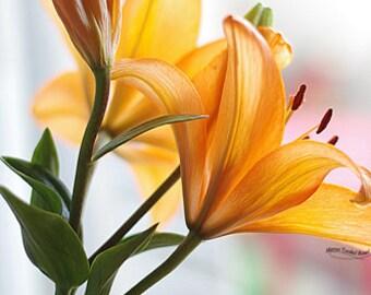 Fleur de lys 2; photography, floral nature, nature, orange and beige decor.