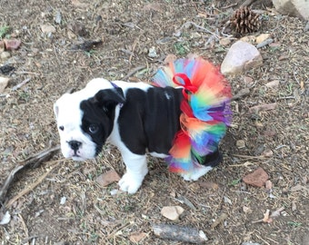 Rainbow Tutu For Bulldogs/Rainbow Tutu For Dogs/Rainbow Tutu