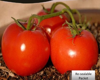 Tomato Ace 55 Seeds Packet