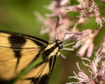 Nature photography print, flower photography, floral photography, nature decor, butterfly photography, butterfly