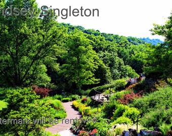 Nashville Botanical Garden - Photography - Nature - Digital Download