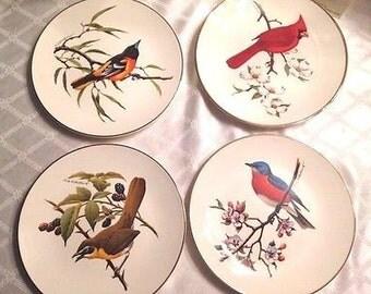 North American Songbirds