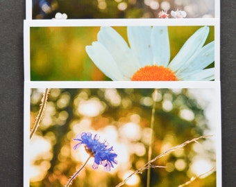Set of 3 beautiful fine art photographic greetings card - Spring blossom/flowers/macro nature photography