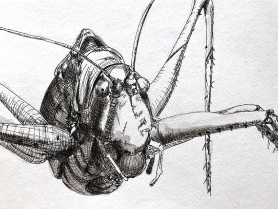 Pen and Ink Katydid on Paper: Original