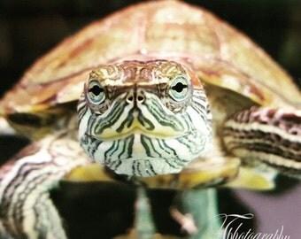 Turtle, Tiny, Pretty