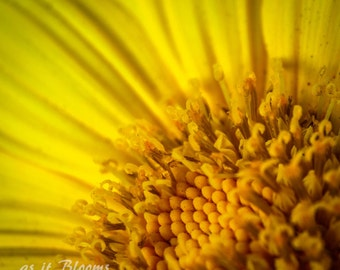 Sunflower Macro Flower Nature Photography Fine Art Wall Print