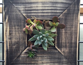 Living Succulent hanging wall garden