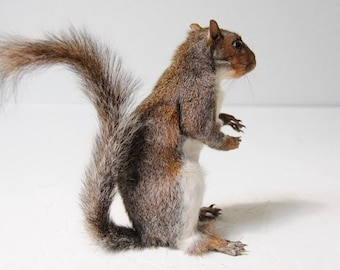 taxidermied squirrels
