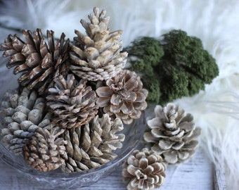 Bleached Pinecones, Bleached Cones, Weathered Pinecones, Rustic Decor, Winter Decor, Christmas Decor