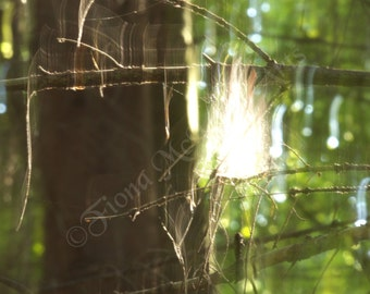 Spider's Web Abstract Canvas Print