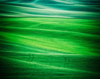 Palouse, Green Landscape, Abstract Photography, Eastern Washington Photos, Rural Photo, Agriculture, Curvy Hills, Nature, Minimalist Art