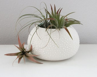 Handmade Porcleian Urchin Vase - Sweet Pea in Mint Green Large Ceramic Air Plant Containter - Mint Green Air Plant Pottery