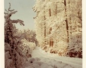 Vintage photo 1969 Winter Wonderland Ice Snow covered Trees Square Color Snapshot