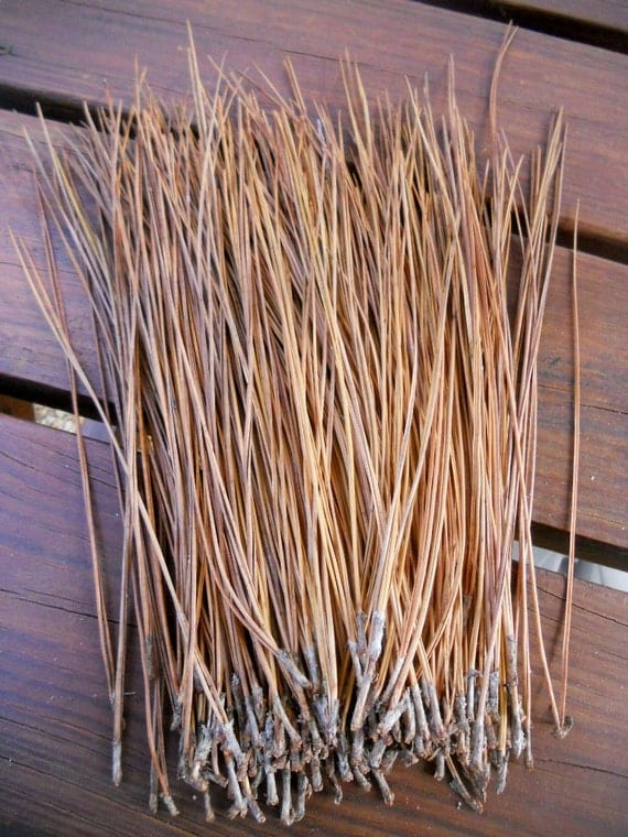 Basket Making Materials Suppliers : Pine needles for needle basket making weaving