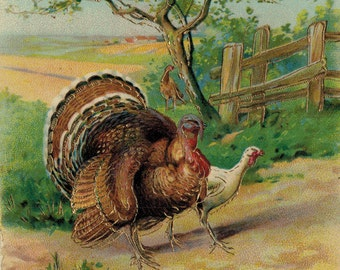 Antique Thanksgiving Postcard Emboseed and Illustrated Gold Embellishments  Full Turkey Illustrations