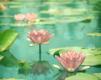 40% OFF SALE Floral, Nature Photography Pink Flowers Lotus Picture Pink Aqua Teal Blue Waterlillies - Floral 8x8 inch Print - Dancing in Sti