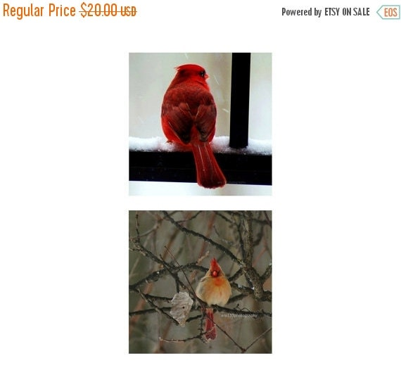"40% OFF SALE Cardinal Photos, Nature Pictures, Birds, Animal photography, Gift Set of f Two 5x5 inch Red Cardinal Photos, Parents - ""Cardina"