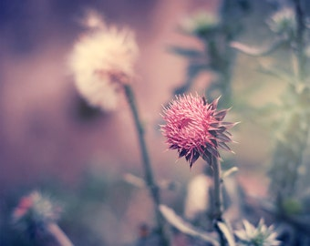 Thistle Photography, Botanical Photography, Dreamy Nature Print, Pink and Green Wall Art, Colorful Decor, Kitchen Art, Flower Photography
