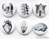 Human Anatomy teacher gift MAGNETS brain skull anatomical heart vertebrae body geekery pins stocking stuffer brain party favors medical goth