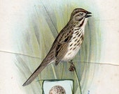 vICTORIAN TRADE CARD, The American Singer Series, Song Sparrow, curated by junqueTrunque