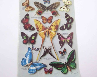 Gorgeous Color Book Plate of Butterflies and Tropical Fish with French Descriptions