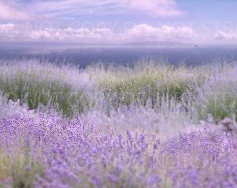 Lavender field daytime background