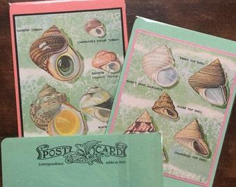 Seashell Postcards Set of 3