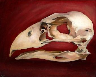 Terror Bird Skull, Open Edition fine art print, skeleton, death, bird of prey, dinosaur