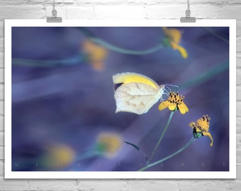 Butterfly Art, Nature Photography, Purple, Yellow, Butterfly Print, Violet, Blue, Fine Art Photography, Insect Art, Bug Photography